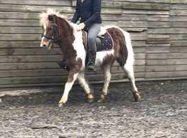 Sweet Child's Pony