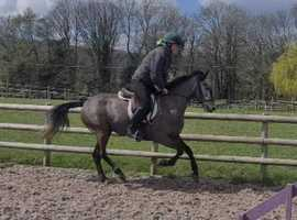 Reduced -due to limited time with small jockeys to ride - talented 138cm