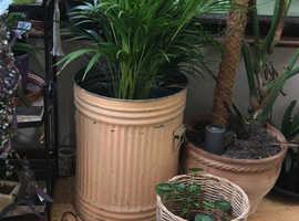 Palm indoor