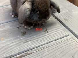 Girl mini lops