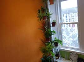 Indoor potted plants tower, rack