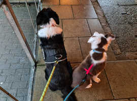 Dog / puppy training in Tadcaster, Wetherby