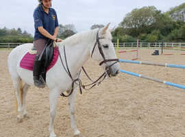 14.2 mare all-rounder