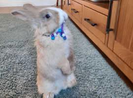 Bunnies for a good home