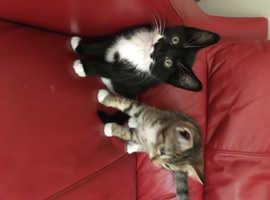 Gorgeous kittens