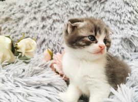 2 lovely kittens (male&female)