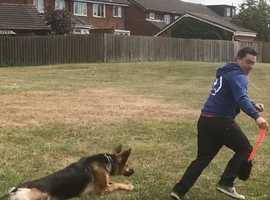Dog Trainer in sunderland