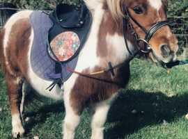 Charlie lead rein pony