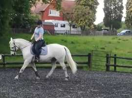*REDUCED* Heartbreaking sale for a very loved pony