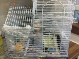 Cage with Male Budgie