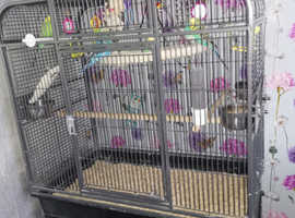 8 budgies and cage
