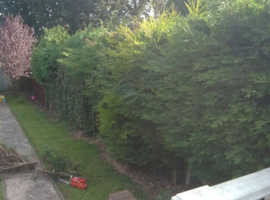 Tree maintenance and garden maintenance