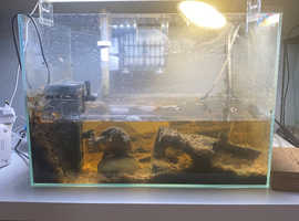 Two Musk Turtles