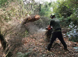 Tree surgery/Arboriculture sevices