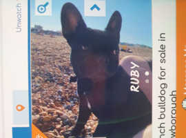 Wanted dog to rehome
