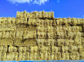 Wheat straw bales, Chelmsford