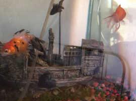 Fish + Fish tank,accessories