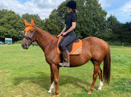 Beautiful sweet mare