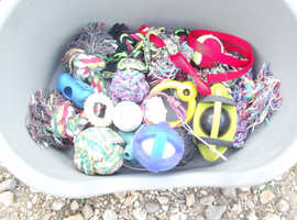 Collection of Dog Toys for Sale