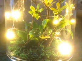 Glass Terrarium with LEDs