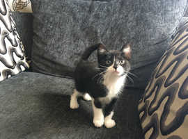 BEAUTIFUL BLACK/WHITE FEMALE VET CHECKED CAN DELIVER