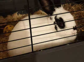 Rabbit and double cage