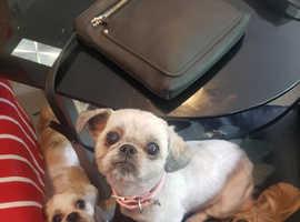 3 brown puppies photo of mun