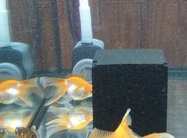 Gold Fishies & Tetra Fish tank