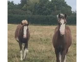 Outstanding colt foals