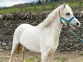 Registered sec a mare