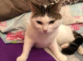 Male Cat needing new Home