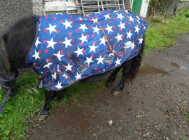 Standard Shetland mare