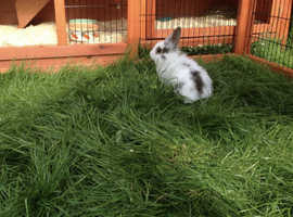 Outdoor Small Pet Boarding(rabbits,guineapigs)