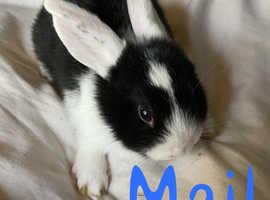 Mix breed baby rabbits