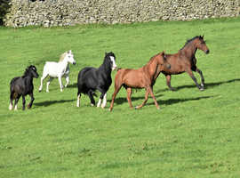 Livery in the Lake District: Retirement, youngstock, DIY and full livery available