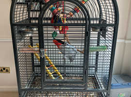 African grey parrot with cage, 13 years old