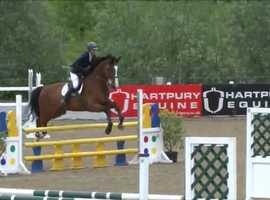 Talented SJ/XC mare