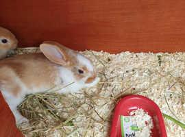 Mixed breed baby rabbits