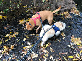 Buddy's Pawz offer dog walking and other pet services