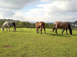 Field / Grazing for 2 ponys Ebbw Vale area