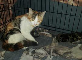 Beautiful kittys
