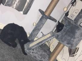 Puma and kiki for free