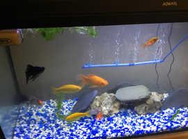 Filter or fish eqpment,pumps heater