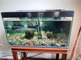 We are looking for a good home for our four community fish