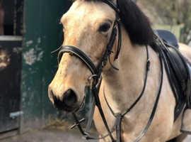 Perfect Pony.