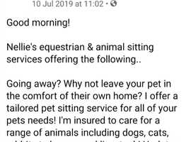 Insured pet,horse, house sitter available