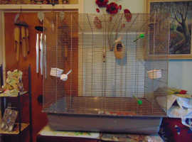2 FINCHES AND CAGE FOR SALE.