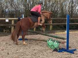 Super 2nd Pony