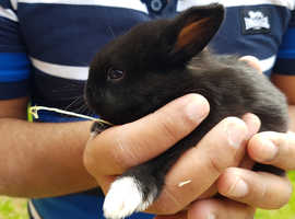 Baby rabbit ready to go to new home (All reserved)