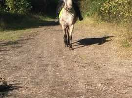 Stunning spotted mare Ideal mother daughter Share